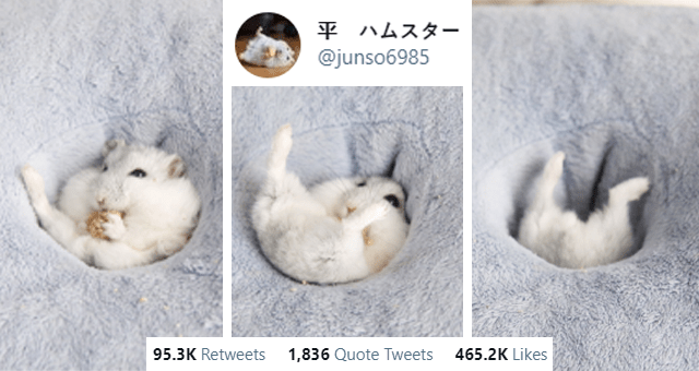 tweets from @junso6985 of a white hamster thumbnail includes three pictures of a white hamster falling into a cushioned hole 'Cat - 平 ハムスター @junso6985 ... 吸い込まれていきました Translated from Japanese by Google I was sucked in 12:33 PM Mar 5, 2021 Twitter for iPhone 95.3K Retweets 1,836 Quote Tweets 465.2K Likes'
