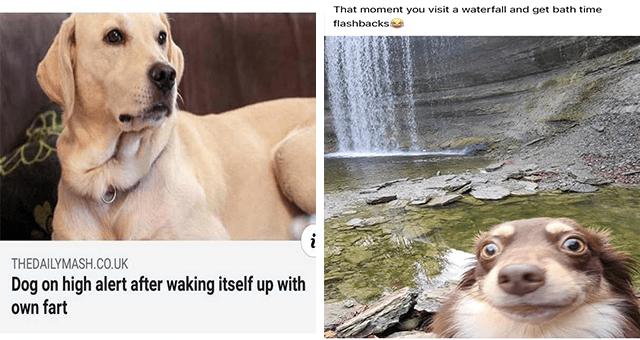 This week's collection of dog memes thumbnail includes two memes including a dog looking concerned 'Dog - THEDAILYMASH.CO.UK Dog on high alert after waking itself up with own fart' and another of a dog looking concerned next to a waterfall 'Water - That moment you visit a waterfall and get bath time flashbacks'