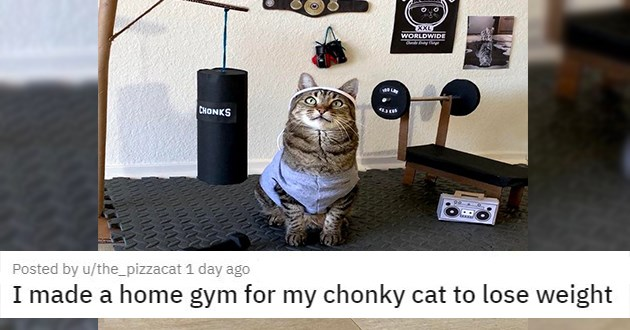 "cat medley filled with cuteness, laughs - thumbnail of homemade cat gym ""I made a home gym for my chonky cat to lose weight"""