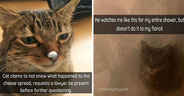 fresh cat snaps - thumbnail of cat with cheese on its nose and pic of cat watching someone shower