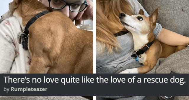 imgur thread about an affectionate rescue dog thumbnail includes two pictures of a dog cuddling a person 'There's no love quite like the love of a rescue dog. by Rumpleteazer'