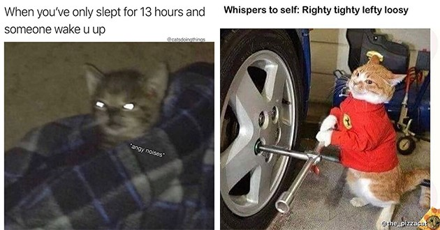 """weeks hottest and newest cat memes - thumbnail includes two images - one of a angry kitten """"When you've only slept for 13 hours and someone wake u up"""" and one of a cat working on a car """"Whispers to self: Righty tighty lefty loosy """""""