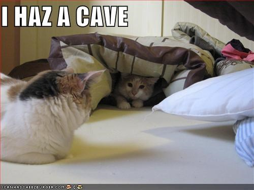 bed,blanket,cave,lolcats
