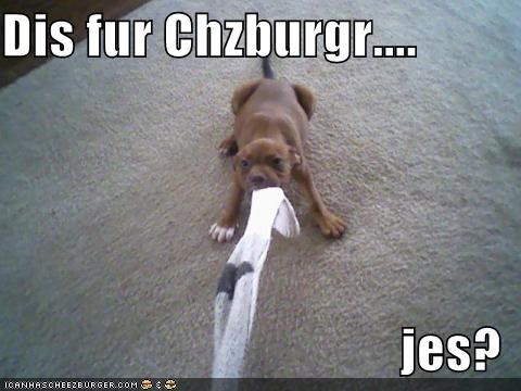 Cheezburger Image 1379974912