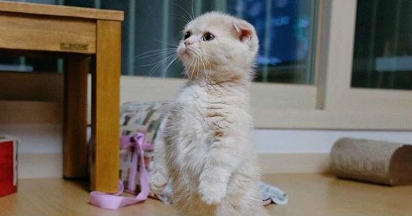 standing munchkin photoshop battle Cats - 1380613