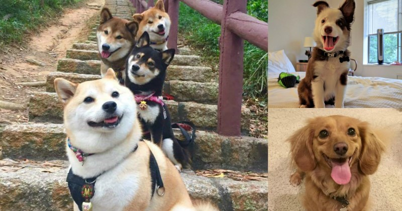 cute pics of dogs smiling like the puppers they are