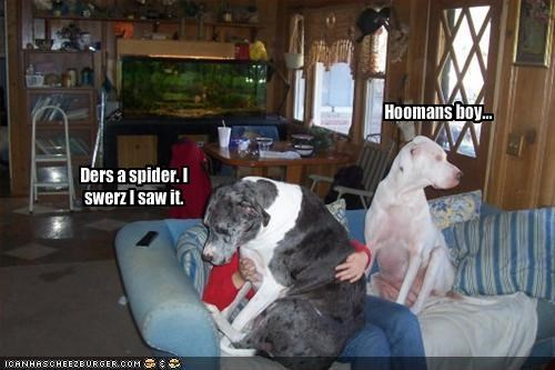 couch,pitbull,scared,spider,whatbreed