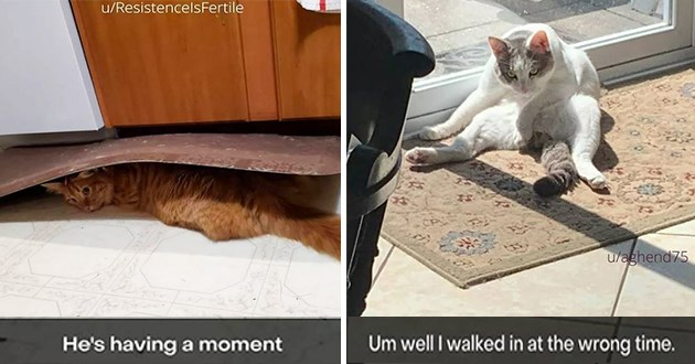 fresh cat snaps - thumbnail of cat under welcome mat and a cat sitting strangely
