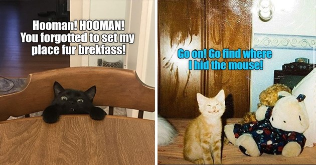 "ichc original cat memes lolcats - thumbnail includes two images - an image of a cat at the table ""Hooman! HOOMAN! You forgotted to set my place fur brekfass!"" and a smiling orange kitten ""Go on! Go find where I hid the mousel"""