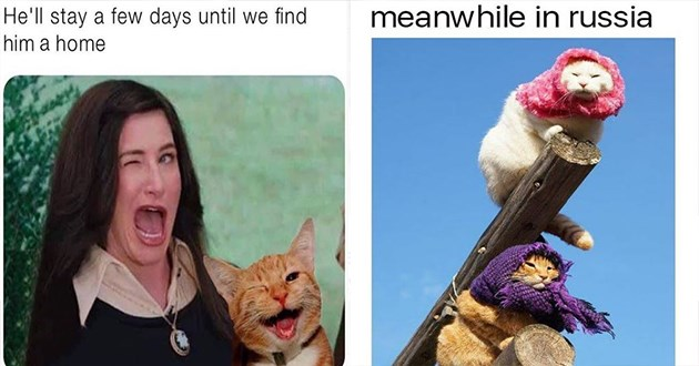 """Fresh cat memes - thumbnail of woman winking and cat winking """"He'll stay a few days until we find him a home"""" and image of babuskats """"meanwhile in russia"""""""