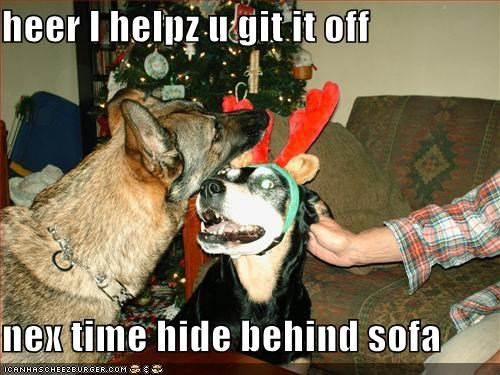 christmas costume german shepherd helping - 1383186688