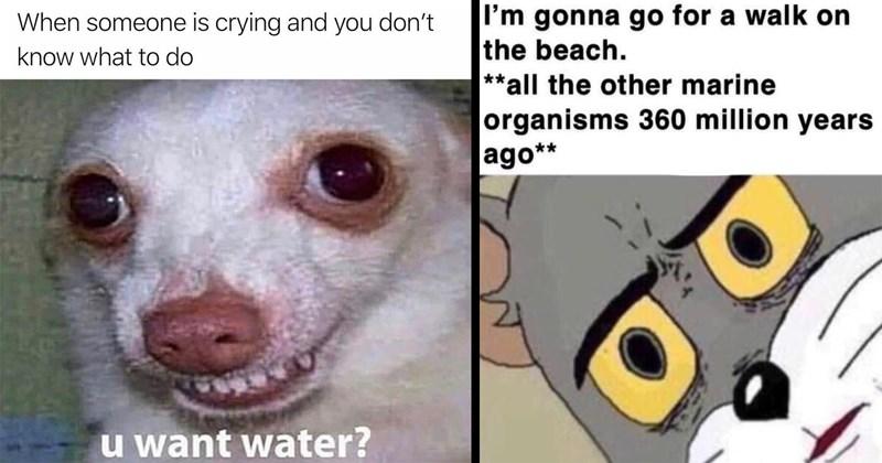 random memes, meme dump, funny memes, memes, lol, funny, dumb memes, relatable memes, nerdy memes, gaming memes, shitposts, funny tweets, twitter memes, animal memes