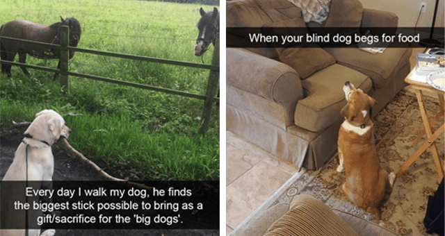collection of dog memes thumbnail includes two memes including a dog holding a huge stick in front of two horses 'Plant - Every day I walk my dog, he finds the biggest stick possible to bring as a gift/sacrifice for the 'big dogs'.' and another of a dog looking up at a couch 'Brown - When your blind dog begs for food'