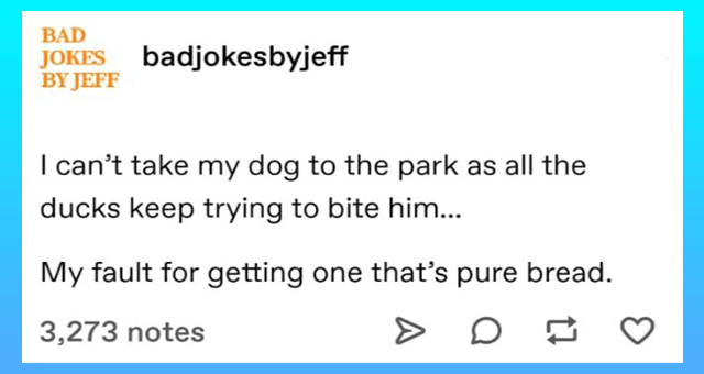tumblr posts by badjokesbyjeff od jokes so bad they're good thumbnail includes one tumblr post 'Rectangle - BAD JOKES badjokesbyjeff BY JEFF I can't take my dog to the park as all the ducks keep trying to bite him.. My fault for getting one that's pure bread. 3,273 notes'