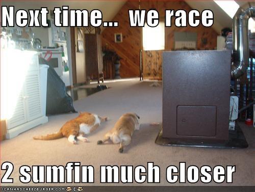 collapse FAIL lazy race whatbreed