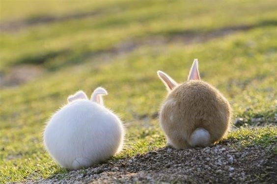 list,cute,tails,bunny