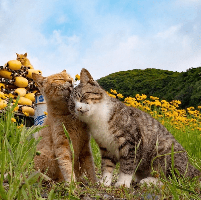 adorable and peaceful cat pics - thumbnail of two cats being all cute in a field of flowers