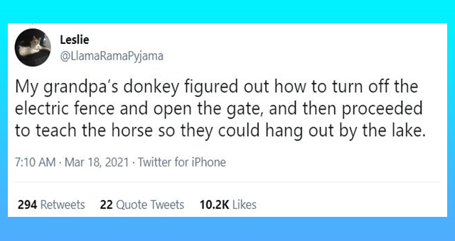 viral tweets about donkeys thumbnail includes one tweet 'Font - Leslie ... @LlamaRamaPyjama Replying to @spindlypete and @MaraWilson My grandpa's donkey figured out how to turn off the electric fence and open the gate, and then proceeded to teach the horse so they could hang out by the lake. 7:10 AM Mar 18, 2021 - Twitter for iPhone 294 Retweets 22 Quote Tweets 10.2K Likes'