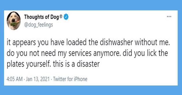 "thoughts of dogs tweet - thumbnail of dog thought tweet "" it appears you have loaded the dishwasher without me. do you not need my services anymore. did you lick the plates yourself. this is a disaster"""