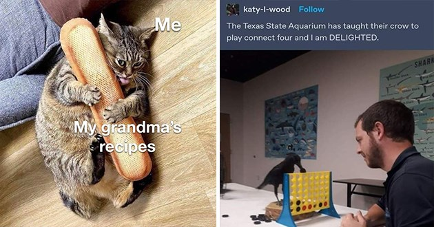 "wholesome animal memes- thumbnail of a crow playing connect four ""The Texas State Aquarium has taught their crow to play connect four and I am DELIGHTED"" and a cat holding onto a badgette"