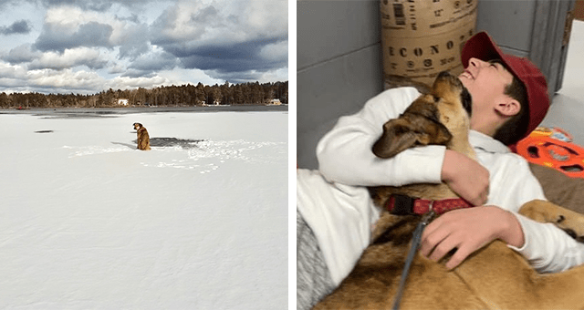 story about a dog that was stranded on a lake getting adopted by her rescuer thumbnail includes two pictures including a dog on a frozen lake and a guy and a dog hugging