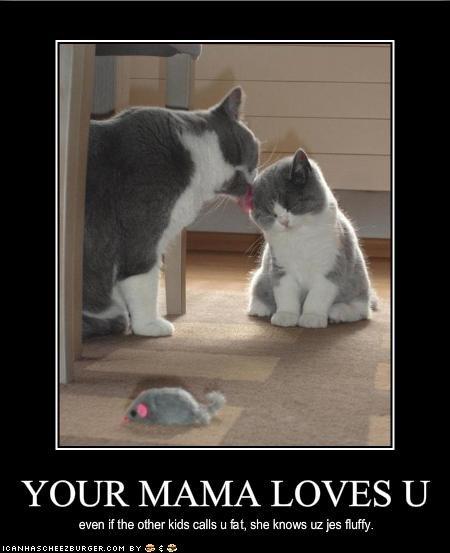 cute fat Fluffy kitten momcat - 1386693888