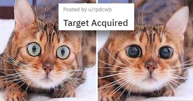 "pics and vids of the cutest animals of the week - thumbnail of cat getting huge pupils ""target acquired"""