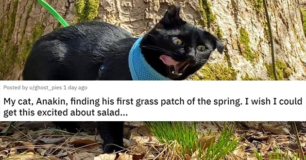 "cat medley filled with cuteness, laughs - thumbnail of cat chewing grass ""My cat, Anakin, finding his first grass patch of the spring. I wish I could get this excited about salad..."""