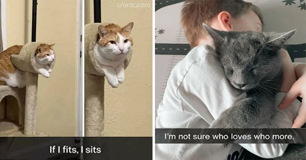 "fresh cat snaps - thumbnail of chubby cat ""if i sits i fits"" and image of boy and cat hugging "" I'm not sure who loves who more"""