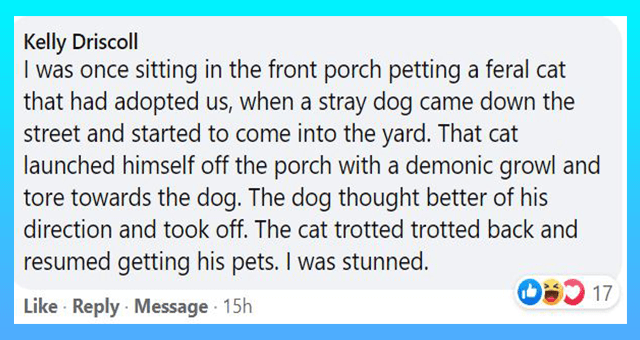 Facebook comments showering cats and dogs with love thumbnail includes one Facebook comment 'Font - Kelly Driscoll I was once sitting in the front porch petting a feral cat that had adopted us, when a stray dog came down the street and started to come into the yard. That cat launched himself off the porch with a demonic growl and tore towards the dog. The dog thought better of his direction and took off. The cat trotted trotted back and resumed getting his pets. I was stunned. 17 Like · Reply M'