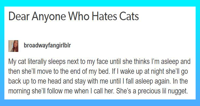 tumblr thread about a cat who loves cuddling.