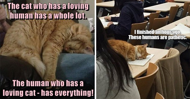"ichc original cat memes lolcats - thumbnail includes two images - an image of a cat sleeping ""The cat who has a loving human has a whole lot. The human who has a loving cat - has everything!"" and an image of a cat sleeping in a classroom ""I finished an hour ago. These humans are pathetic."""