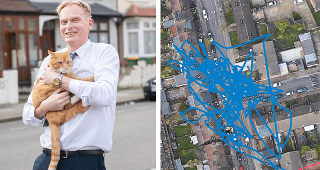 story about a rat stealing a cat's GPS tracker and sending the owner on a wild chase thumbnail includes two pictures including a man holding a cat and a map with lines drawn over it