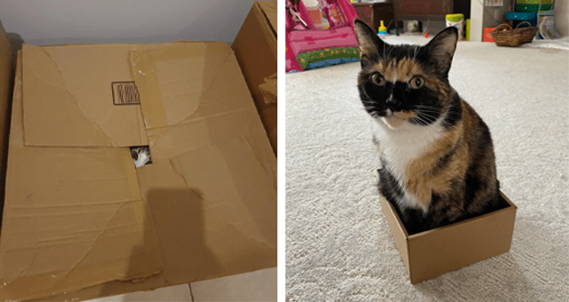 pictures of cats inside boxes thumbnail includes two pictures of cats inside of boxes