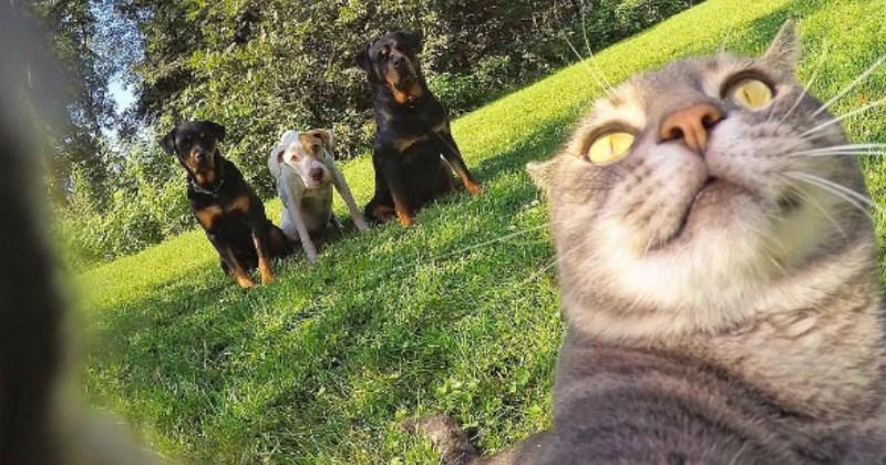 list cute selfie Cats - 1390341