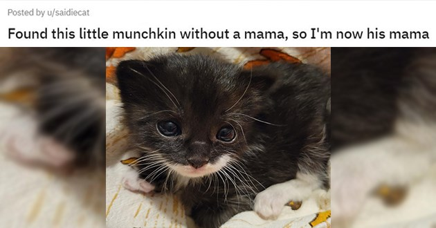 "all the newly adopted rescue animals of the week - thumbnail of cute little kitten ""Found this little munchkin without a mama, so I'm now his mama"""