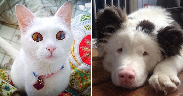 unique and beautiful animals - thumbnail of a cat with beautiful eyes and a dog with panda markings