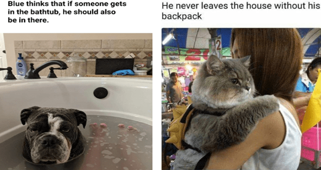 list of funny and fresh animal memes - thumbnail includes two memes - one