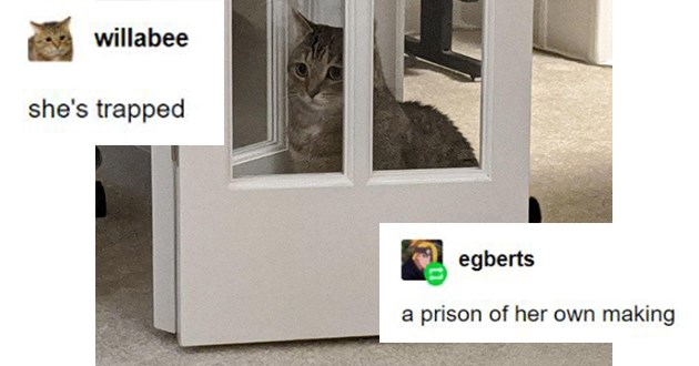 "Fresh cat memes - thumbnail of a cat behind a door ""she's trapped"" ""a prison of her own making"""