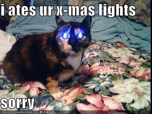 christmas lights lolcats nom nom nom sorry - 1391526656