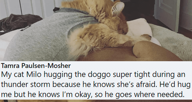 Facebook comments about cats being affectionate thumbnail includes a picture of a cat hugging a dog and one Facebook comment 'Organism - Tamra Paulsen-Mosher My cat Milo hugging the doggo super tight during an thunder storm because he knows she's afraid. He'd hug me but he knows I'm okay, so he goes where needed. He's crazy, but he's loving as heck e'