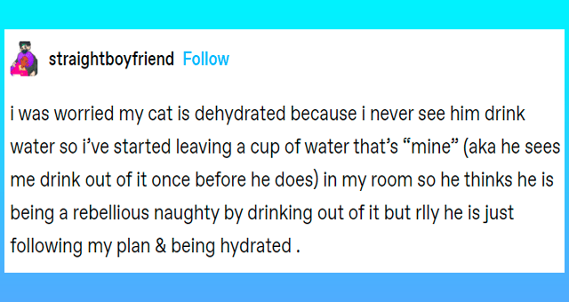 "tumblr posts about getting cats to drink more water thumbnail includes one tumblr post 'Font - straightboyfriend Follow i was worried my cat is dehydrated because i never see him drink water so i've started leaving a cup of water that's ""mine"" (aka he sees me drink out of it once before he does) in my room so he thinks he is being a rebellious naughty by drinking out of it but rlly he is just following my plan & being hydrated .'"