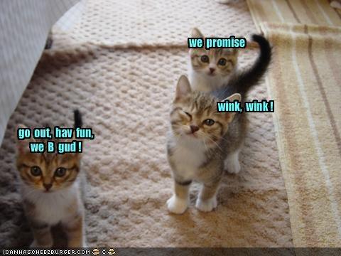 cute gud kitten lolcats lolkittehs lying mischief wink - 1392866560