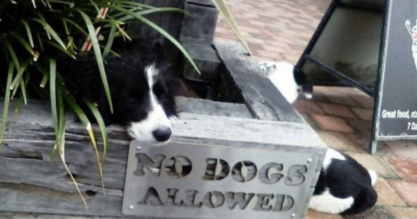 Sad,dogs,pets,waiting,aww