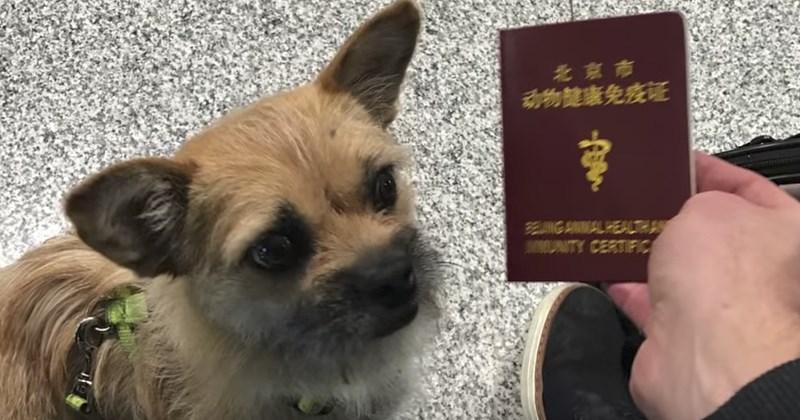 dogs list cute update - 1393157
