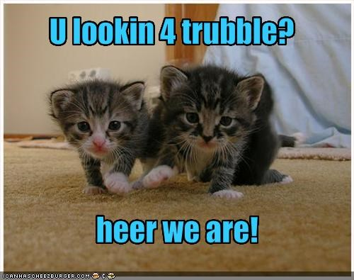 cute kitten trouble - 1393672960