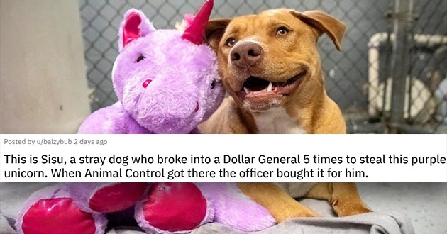 """pics and vids of the cutest animals of the week - thumbnail of smiling stray dog with stuffed unicorn """"This is Sisu, a stray dog who broke into a Dollar General 5 times to steal this purple unicorn. When Animal Control got there the officer bought it for him."""""""