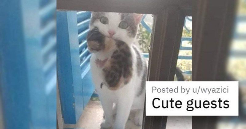 """cat medley filled with cuteness, laughs - thumbnail of cat with kitten """"cute guests"""""""