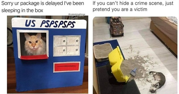 "fresh cat memes - thumbnail of cat in upspspss ""Sorry ur package is delayed l've been sleeping in the box"" and image of cat laying besides giant litter spill ""If you can't hide a crime scene, just pretend you are a victim"""