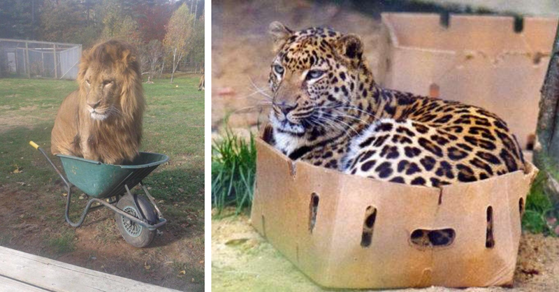 12 photos that show how big cats are the same as small cats